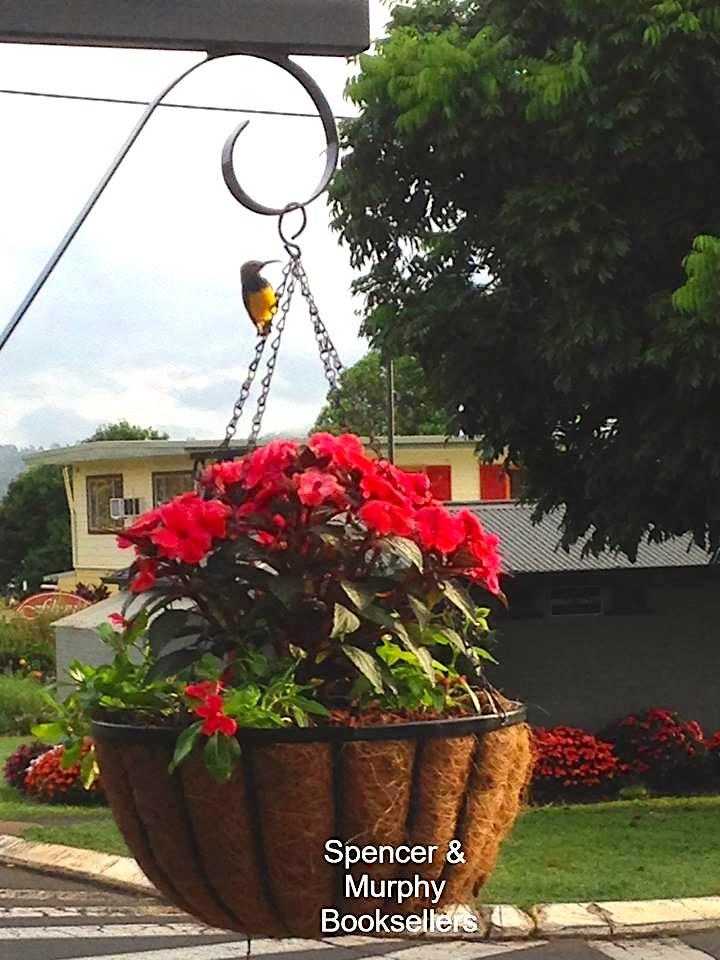 SM flower pot